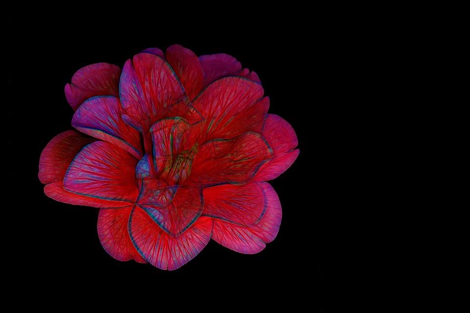 Flower, Blossom, Bloom, Red, Red Flower