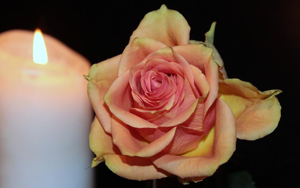 Rose, Blossom, Bloom, Rose Bloom, Orange, Candle