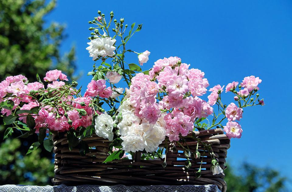 Roses, Bouquet Of Roses, Blossom, Bloom, Pink White