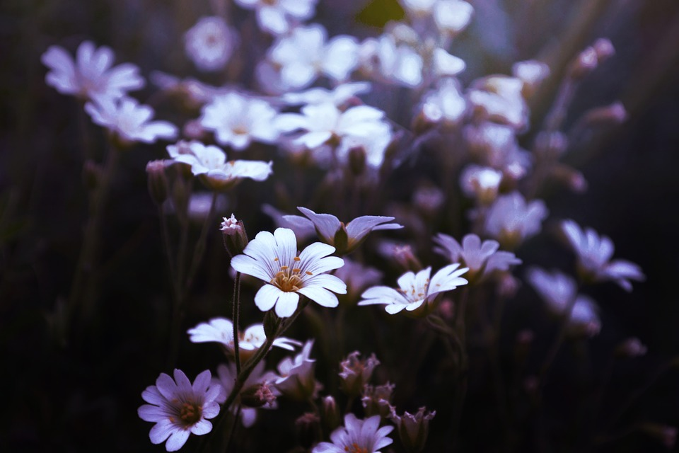 Bloom, Blossom, Blur, Close-up, Color, Delicate, Field