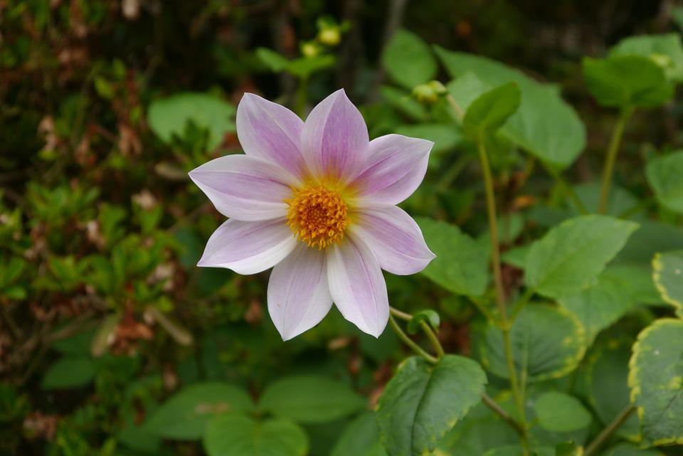 Flower, Blossom, Bloom, Flora, Nature, Close
