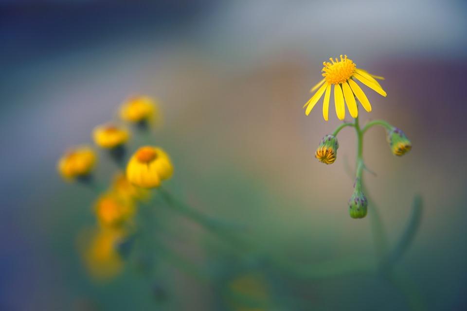 Blossom, Bloom, Autumn, Field, Close Up, Flora, Bloom