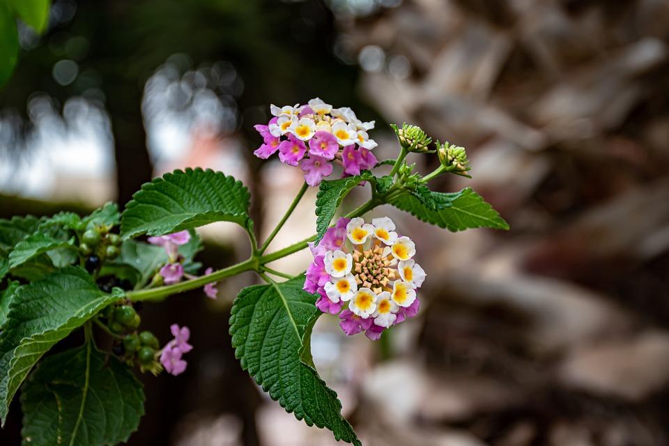 Flower, Plant, Bloom, Blossom, Petals, Flora, Pink