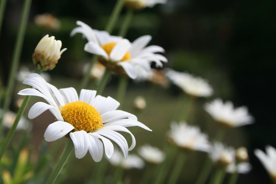 Flower, Blossom, Bloom, Nature, Plant, Petals, Flora