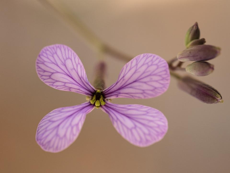 Flower, Plant, Petals, Flora, Botany, Bloom, Blossom