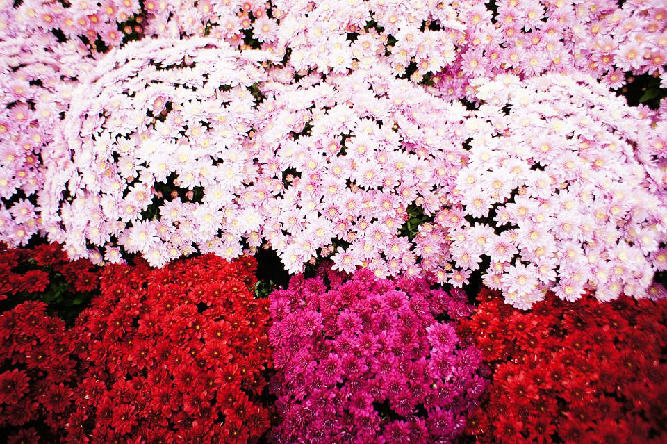 Flowers, Garden, Bloom, Petals, Blossom, Flora, Plants