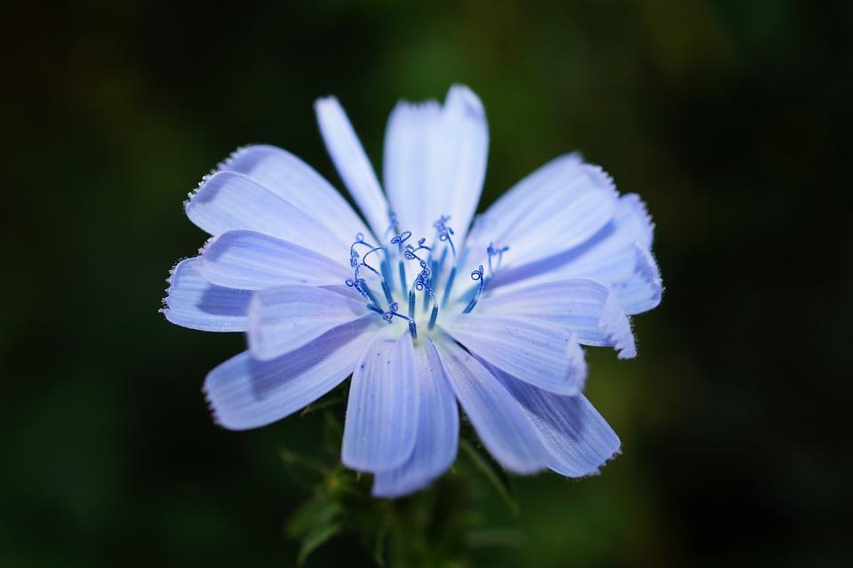 Bloom, Blossom, Flora, Flower, Macro, Nature, Petals
