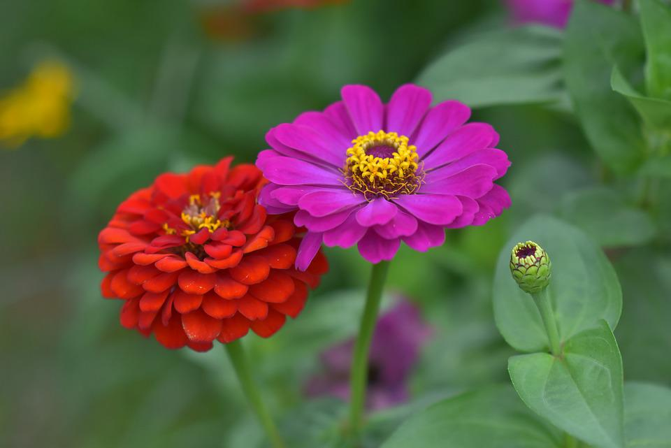 Flowers, Bloom, Plants, Blossom, Flora, Floriculture