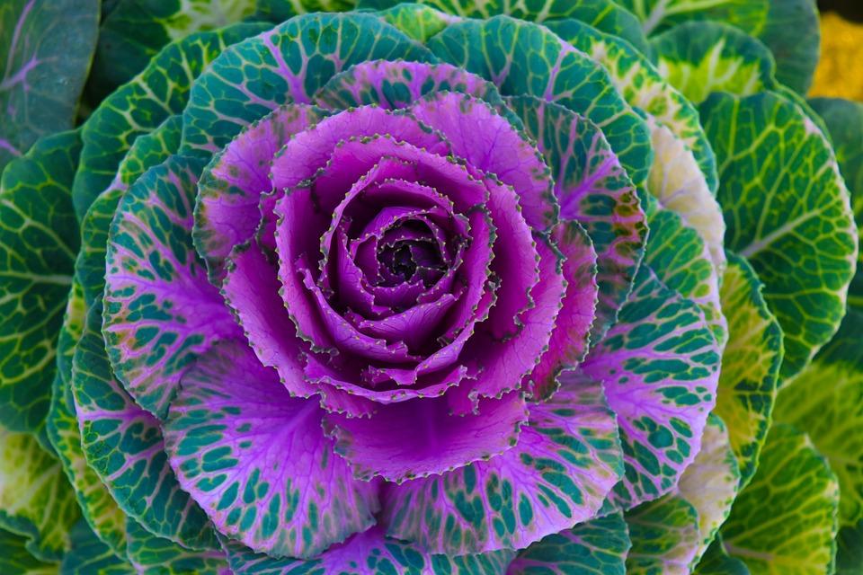 Flower, Bloom, Fresh, Beautiful