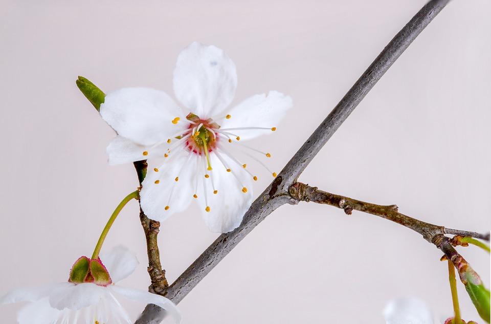 Bleed, Bloom, Flower, Nature, Summer, Plant, Beauty