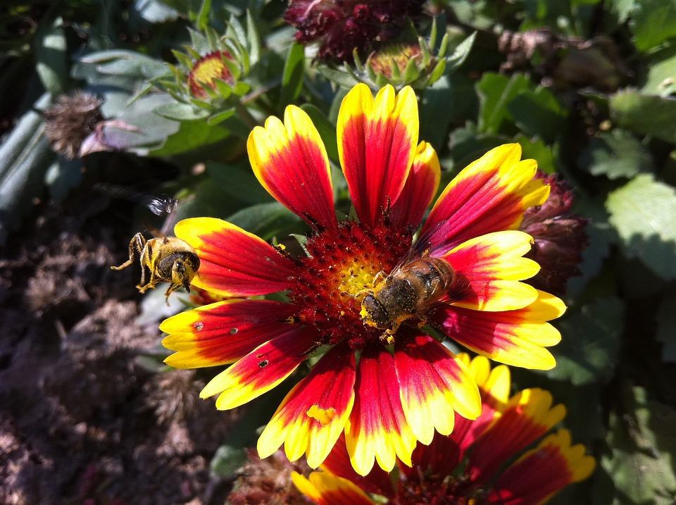 Bee, Flower, Bloom, Beautiful