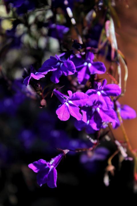 Flower, Bloom, Nature, Blossom, Botany, Plant, Petals