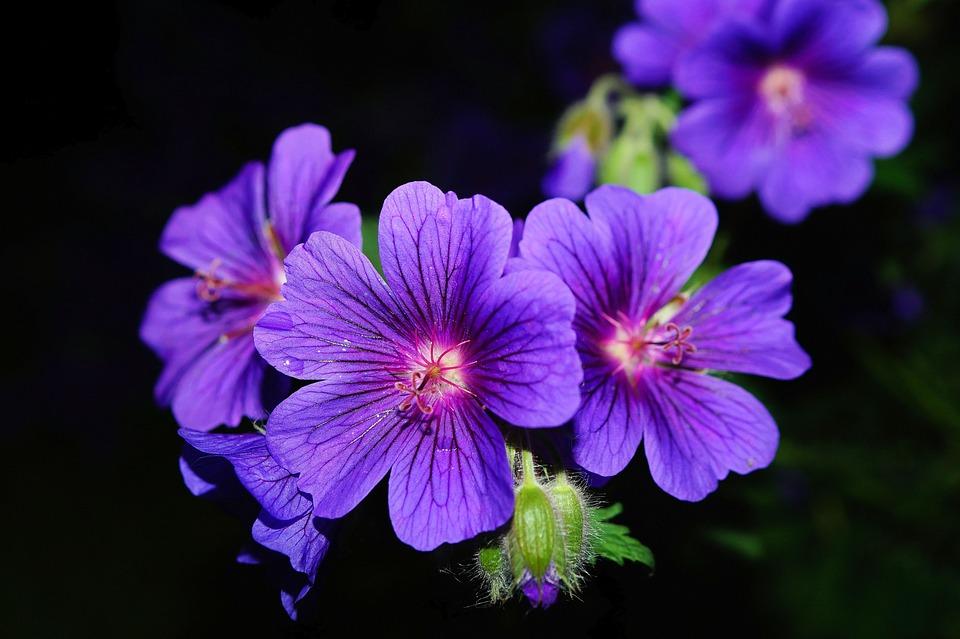 Flower, Blossom, Bloom, Blue, At Night, Flower Garden