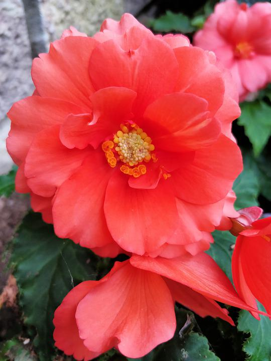 Flower, Orange, Bloom, Blossom, Garden, Colorful