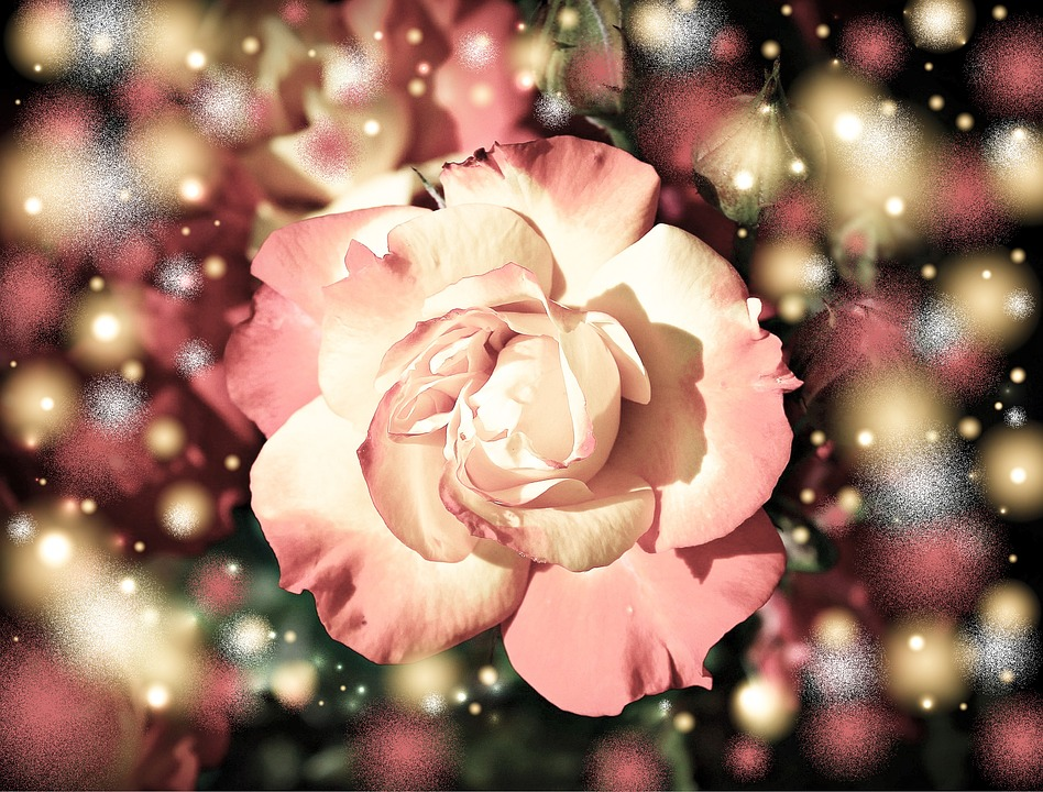 Rose, Blossom, Bloom, Flower, Greeting Card, Fantasy