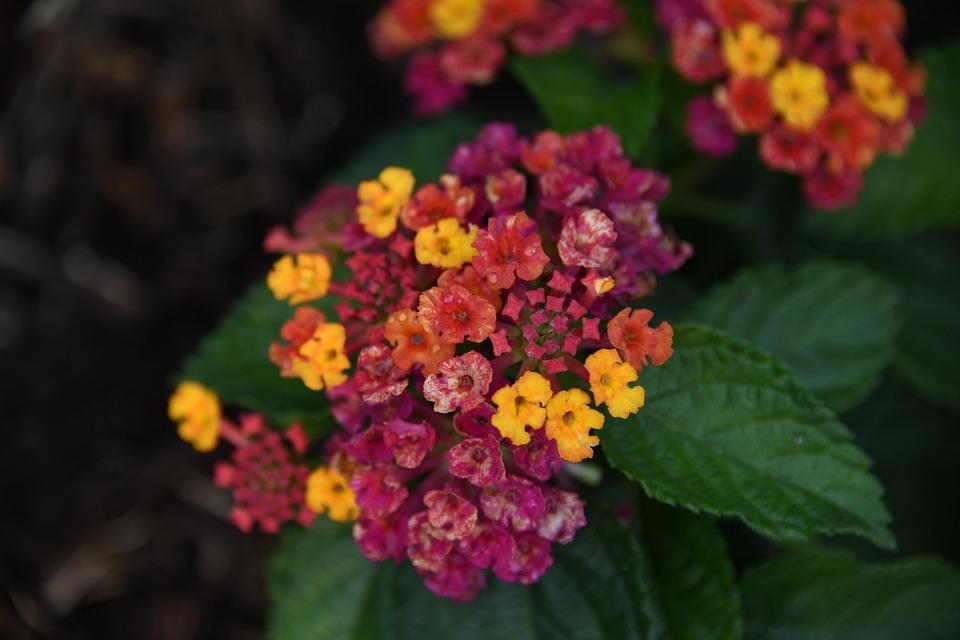 Flower, Bloom, Color, Leaf, Plant, Growth, Life, Nature