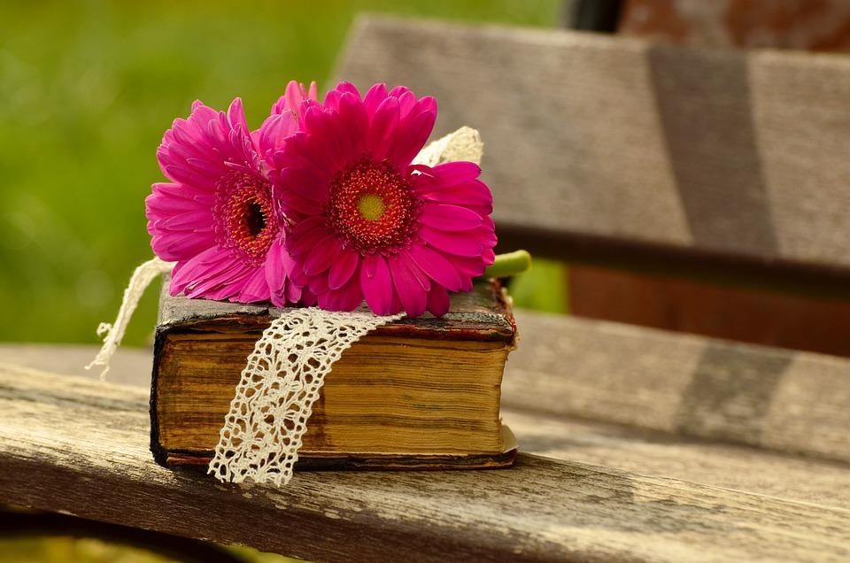 Gerbera, Pink, Flower, Blossom, Bloom, Bank, Romantic