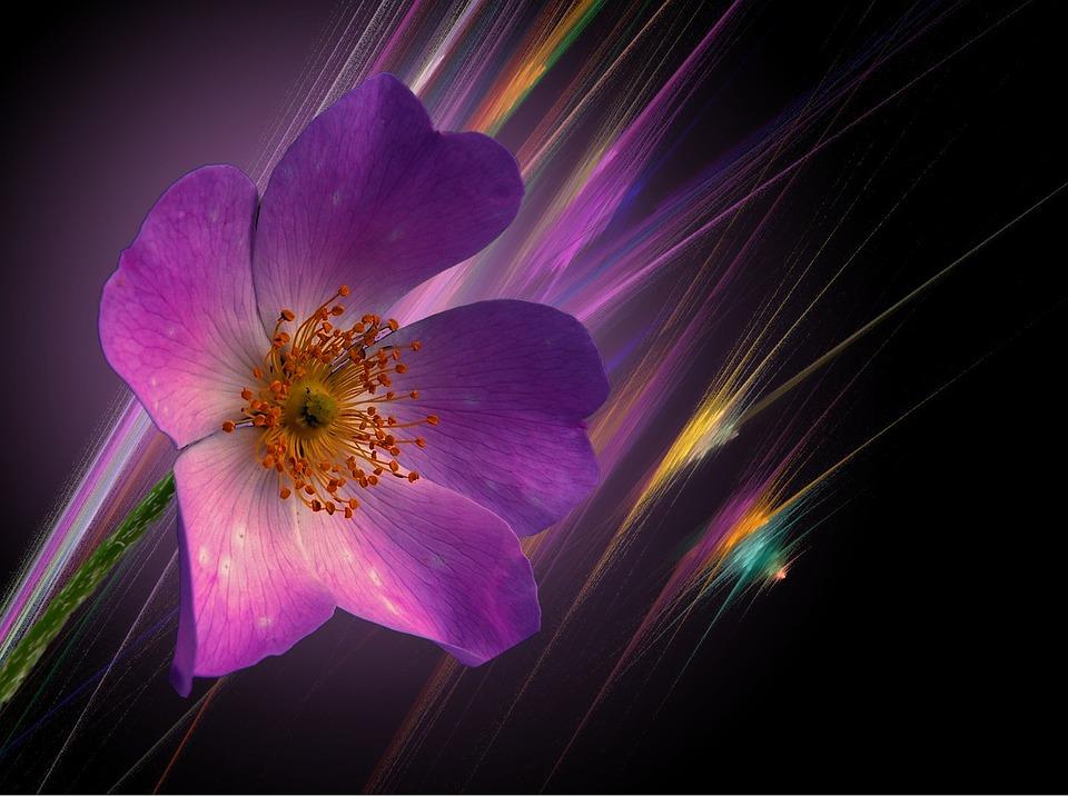 Blossom, Bloom, Flower, Fantasy, Close, Red, Plant