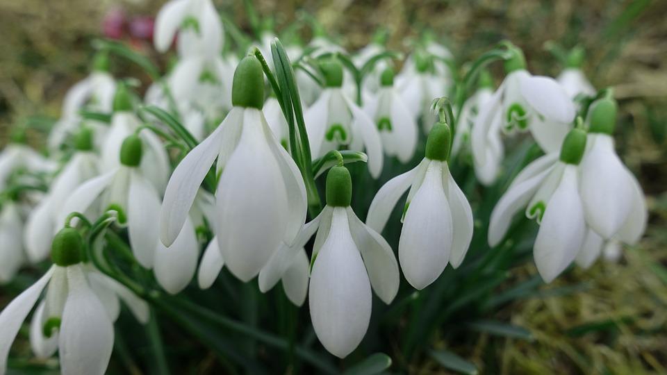 Flower, Spring, Nature, Bloom, Plant
