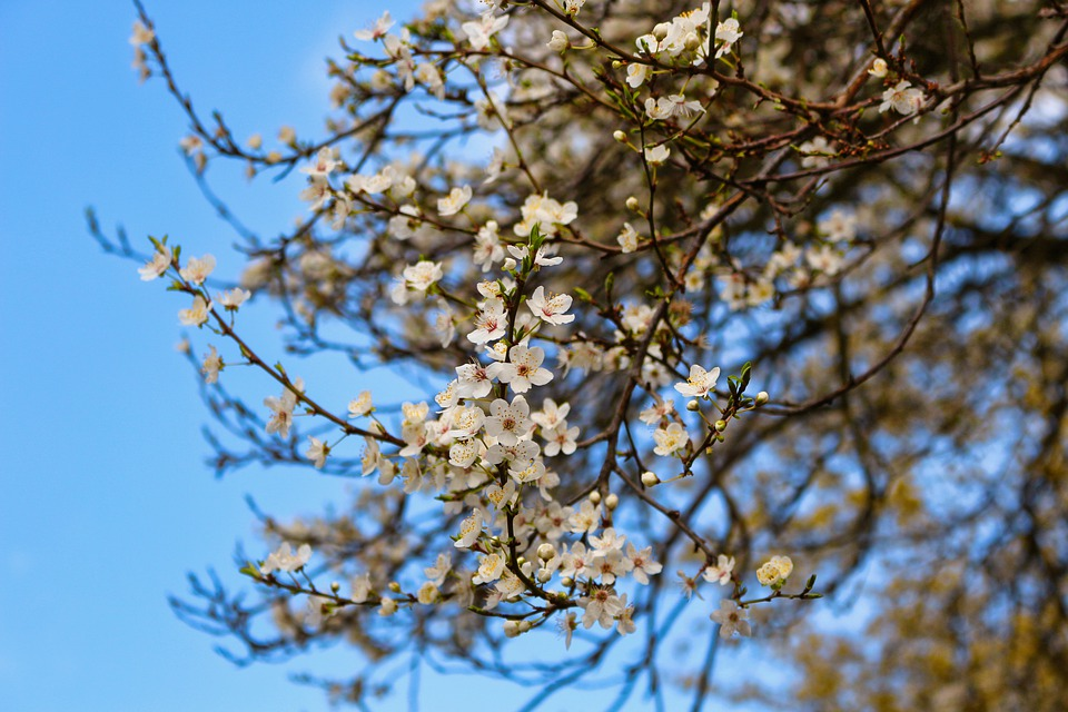 Flowers, Tree, Nature, Bloom, Branch, Growth, White