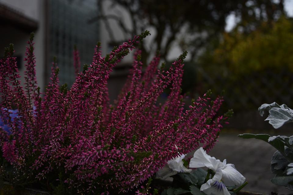 Flowers, Plant, Blossom, Bloom, Ornamental Plant, Flora