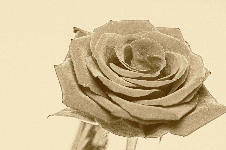 Flower, Spring, Blossom, Bloom, Affection, Fragrance