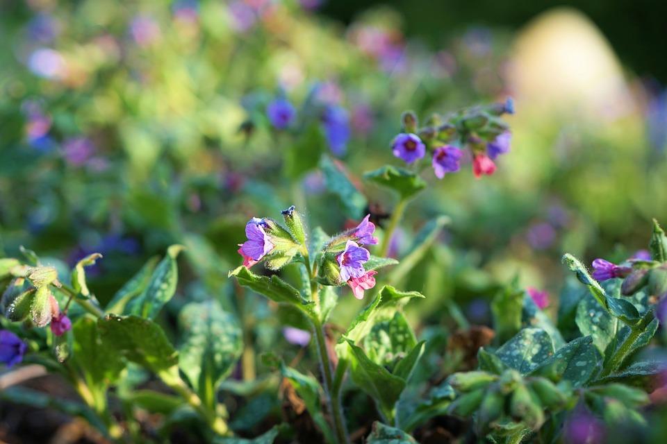 Garden, Flower, Blue, Blossom, Bloom, Spring, Flora