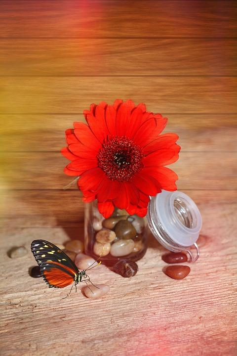 Flower, Gerbera, Blossom, Bloom, Plant, Red