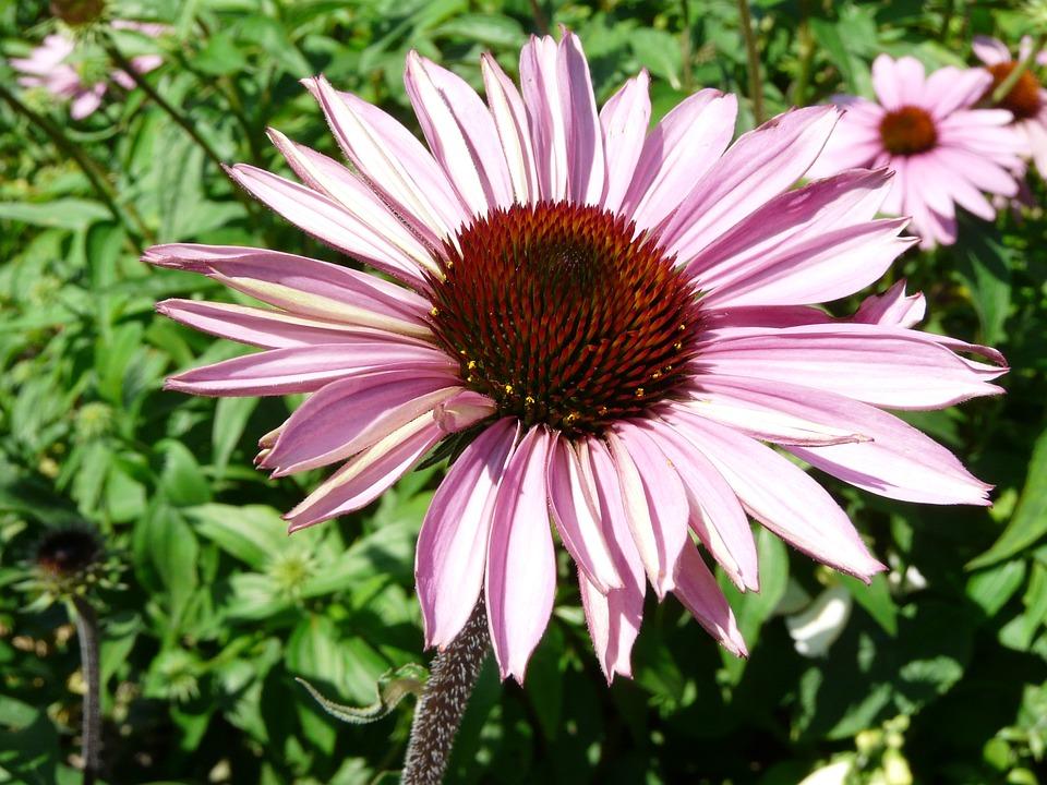 Blossom, Bloom, Gerbera, Close, Flower, Plant, Nature