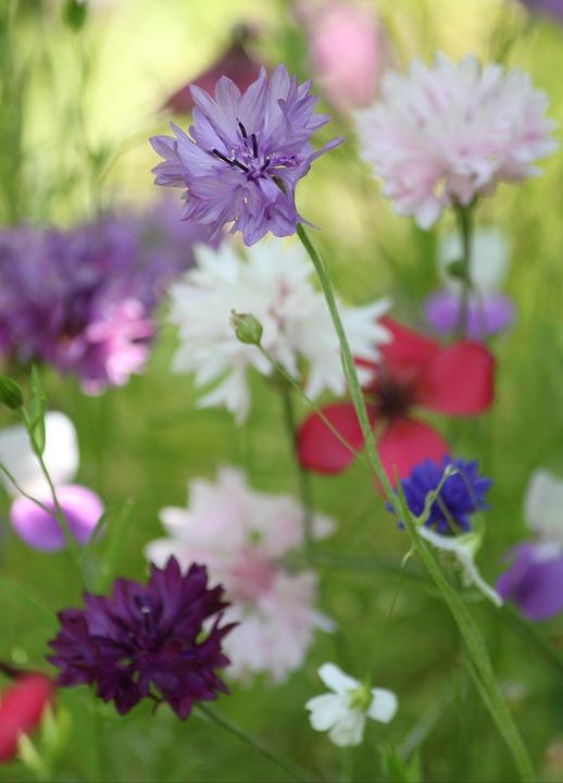Blossom, Bloom, Flowering Stems, Macro, Garden, Flowers