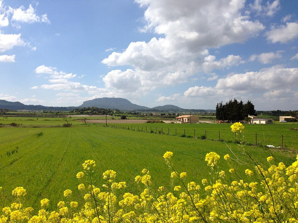 Mallorca, Spring, Bloom, Meadow, Randa, Mountain