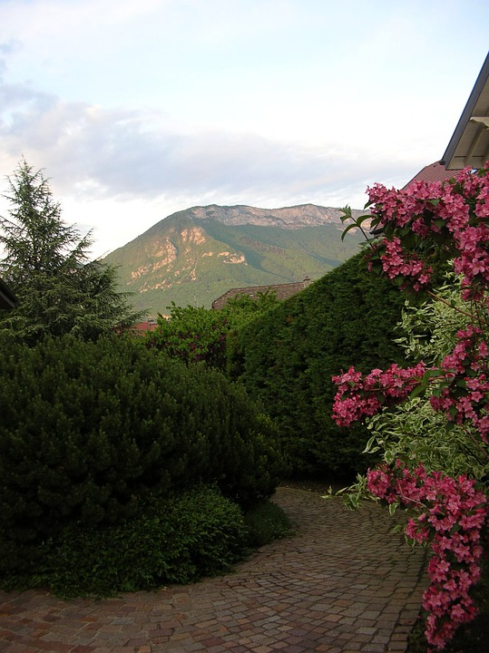 Greenery, Mountain, Floral, Plants, Blossom, Bloom