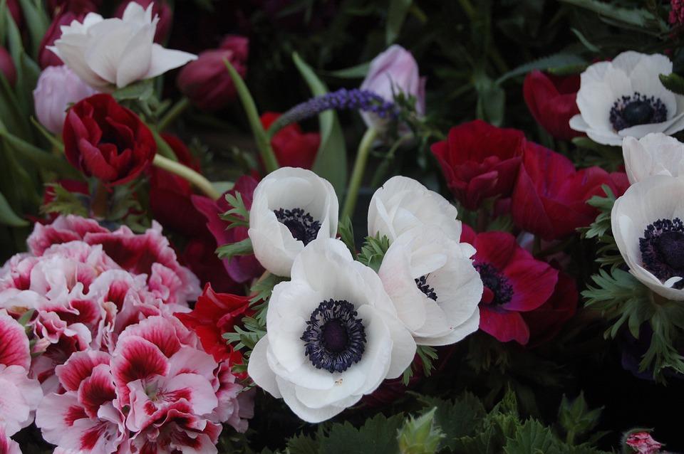 Flower, Nature, Bloom, Floral