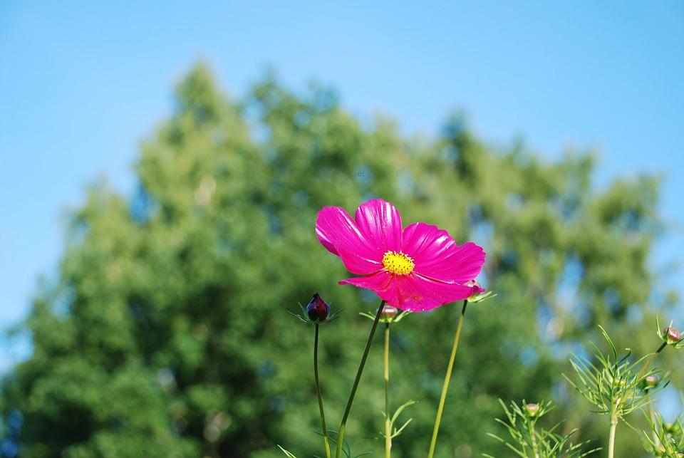 Flower, Purple, Bloom, Leaf, Nature, Green, Yellow