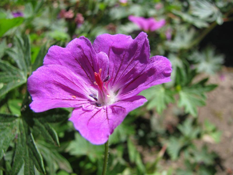 Flower, Macro, Purple, Bloom, Nature