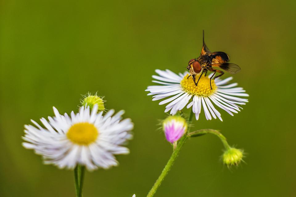 Flower, Plant, Nature, Meadow, Bloom, Plants, Fly