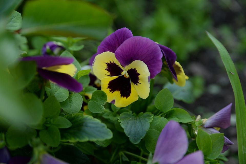 Flowers, Flower, Nature, Plant, Bloom, Garden, Spring