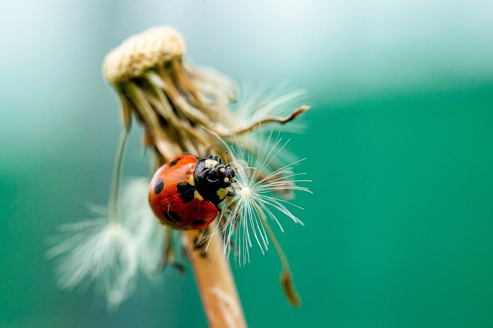Ladybug, Spring, Nature, Bloom, Garden, Blossom, Easter
