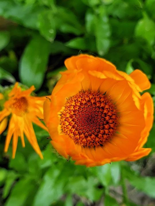 Flower, Orange, Garden, Nature, Bloom, Plant, Spring