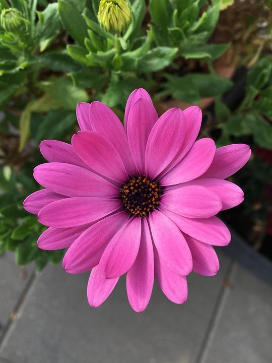 Blossom, Bloom, Pink, Blütenzauber, Petals, Perfect