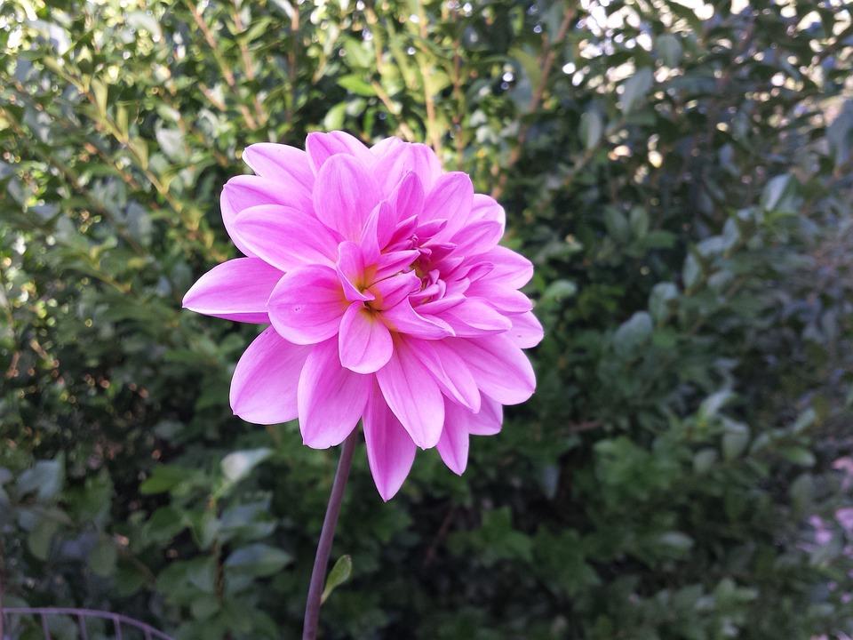 Bloom, Flower, Petals, Plant, Blossom, Flora, Garden