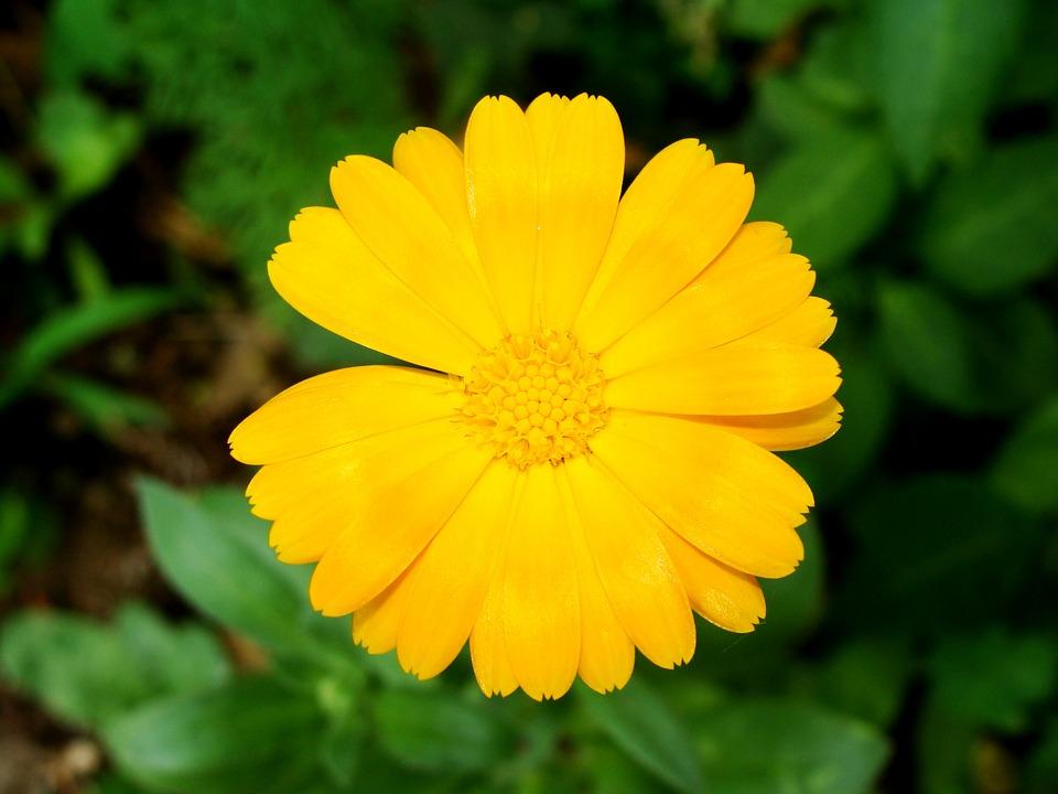Flower, Yellow, Green, Nature, Petals, Garden, Bloom