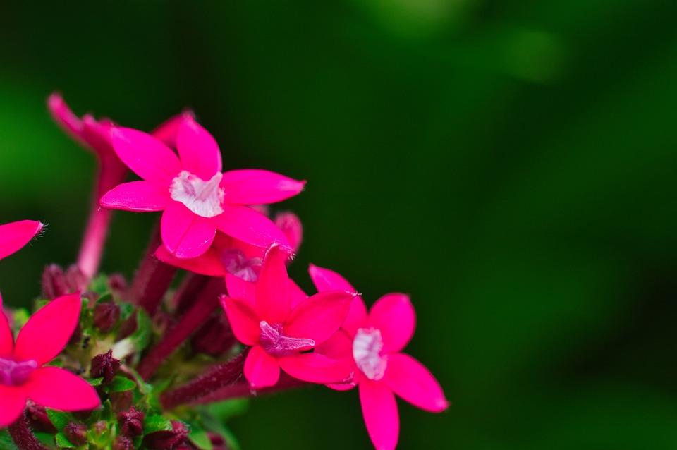 Pink Flowers, Flowers, Bloom, Blossom, Pink Petals