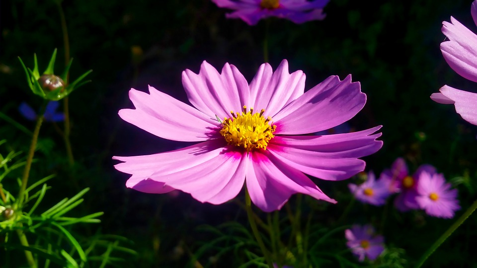 Flower, Pink, Spring, Nature, Love, Blossom, Bloom