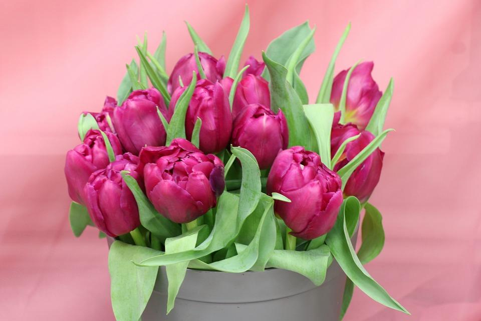 Tulips, Bouquet, Purple, Pink, Spring, Bloom, Flowers