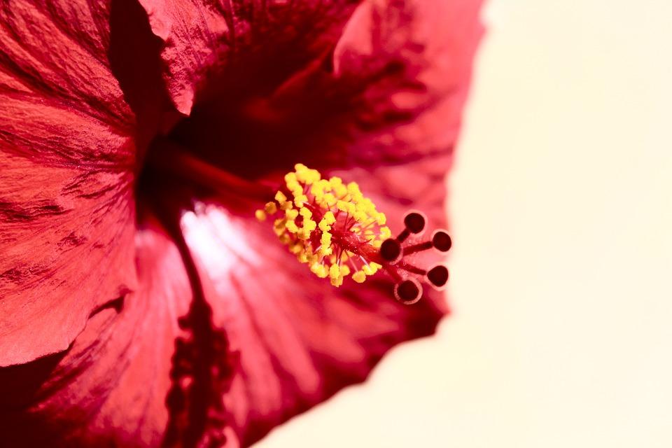 Flower, Plant, Nature, Blossom, Bloom