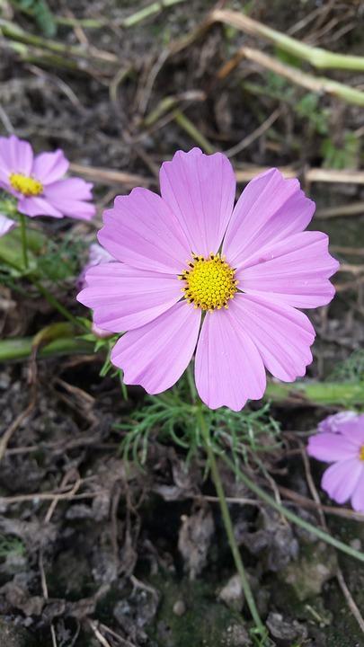 Flower, Blossom, Bloom, Plant, Nature