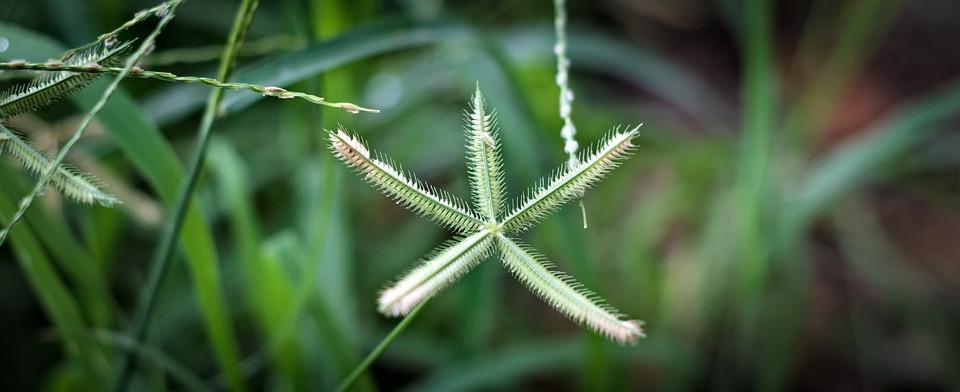 Grass, Wild Flower, Seeds, Nature, Spring, Plant, Bloom