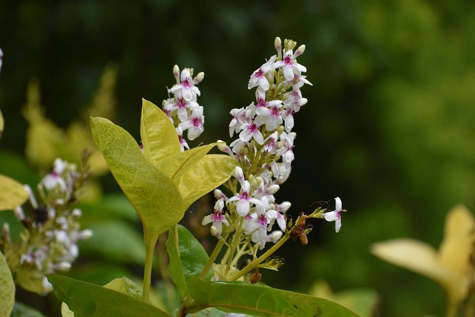 Flowers, Small Flowers, Plant, Flowering Plant, Bloom