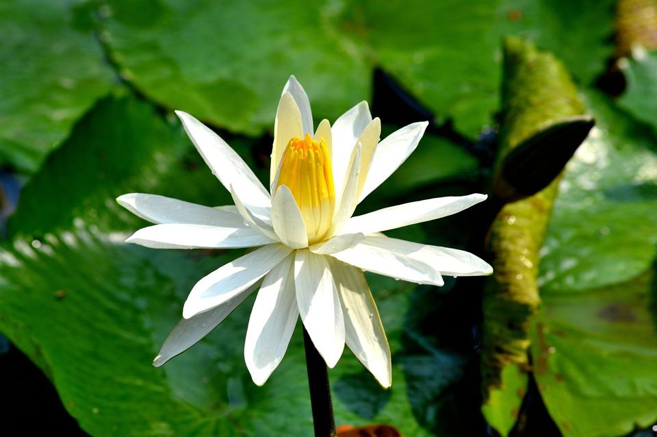 Flower, Pretty, Nature, Blossom, Gardening, Bloom
